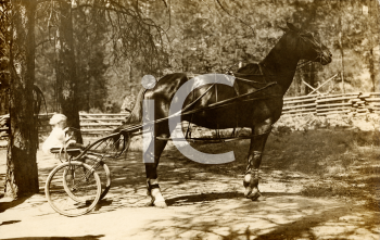 Royalty Free Photo of a Horse and Buggy