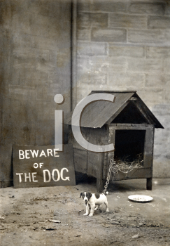 Royalty Free Photo of a Small Dog With a Beware of Dog Sign