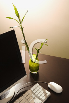Royalty Free Photo of a Computer On a Desk With a Lucky Bamboo in a Vase