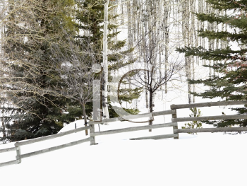 Royalty Free Photo of Snow Covered Colorado Landscape With Trees, Post and Rail Fence