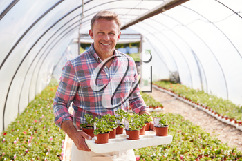 Portrait Of Mature Man Working In Garden Center Greenhouse Holding Tray Of Seedlings In Pots