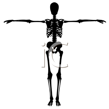 Silhouette of a skeleton