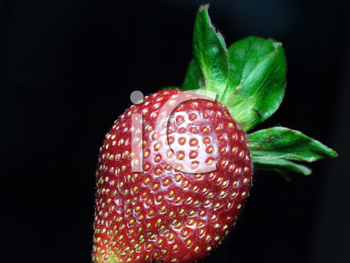 Royalty Free Photo of a Strawberry