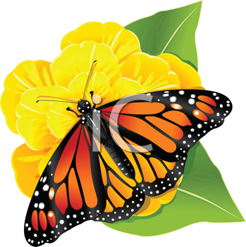 Royalty Free Clipart Image of a Monarch Butterfly on a Yellow Flower
