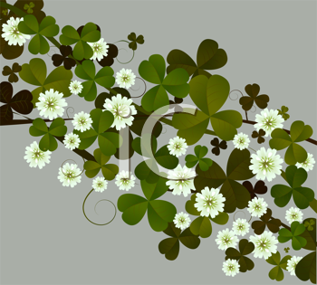 clover or shamrock suitable for St. Patrick's Day