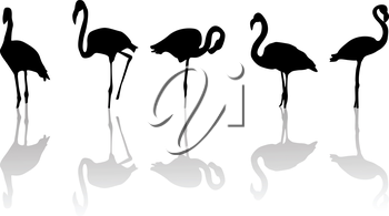 Outline drawing of flamingo birds and relfection
