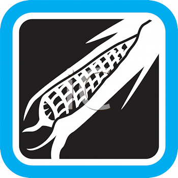Royalty Free Clipart Image of a Cob of Corn