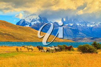 Rocks Torres del Paine visible among the clouds. Magic light of sunset. Herd of mustangs on the shore of Laguna Azul