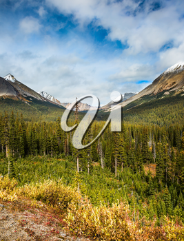 The concept of ecological and active tourism. The Rocky Mountains in Canada. Dense coniferous and deciduous forests at the foot of the mountains