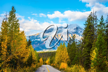Canadian Rockies in fine September day. The highway passes among mountains and the turned yellow woods