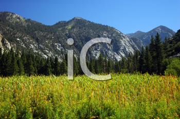 Royalty Free Photo of Kings Canyon National Park