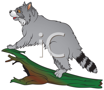 Royalty Free Clipart Image of a Raccoon on a Trunk