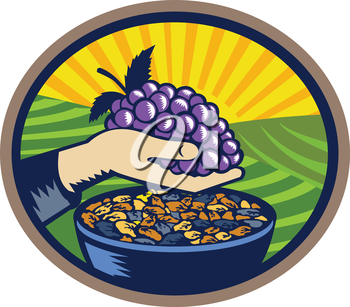 Illustration of a hand holding grapes with raisins in a bowl set inside oval shape with sunburst in the background done in retro woodcut style.