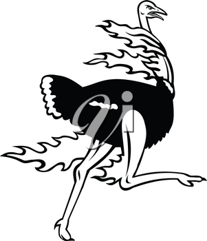Mascot illustration of a common ostrich, a species of large flightless bird native to Africa, running while on fire viewed from side on isolated background in retro black and white style.