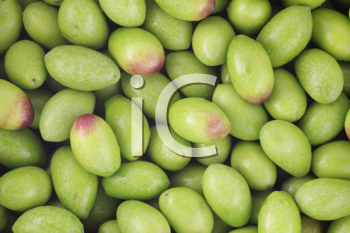 Royalty Free Photo of Raw Olives