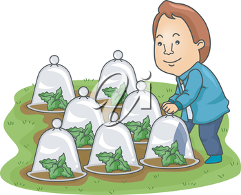 Illustration of a Man Checking His Plants Enclosed in Glass Cloches