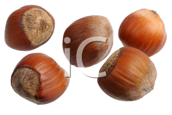Several of hazelnuts on a white background, isolated