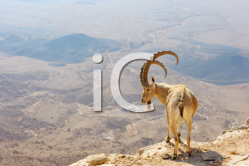 Royalty Free Photo of a Mountain Goat on a Crater