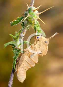 Royalty Free Photo of a Grasshopper on a Prickly Plant