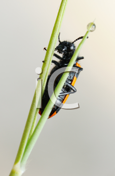 Royalty Free Photo of a Beetle on a Plant