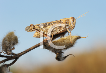 Royalty Free Photo of a Grasshopper on a Branch