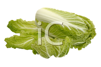 Fresh Beijing cabbage on a white background, isolated