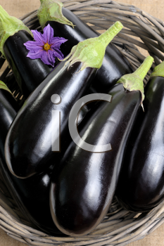 Royalty Free Photo of Eggplants in a Basket
