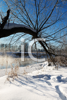 Royalty Free Photo of a Frosty Day With a Tree in the Foreground