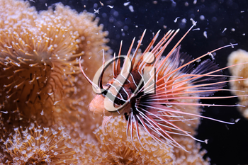 Fish, coral and other bright and colorful inhabitants of the Red Sea.
