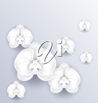 Illustration romantic greeting card with beautiful orchids and copy space for your message or text - vector