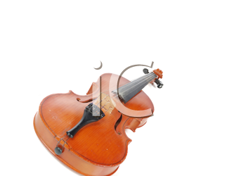 view of violin isolated on white background