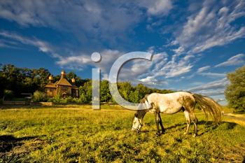 Royalty Free Photo of a Horse Grazing in a Field