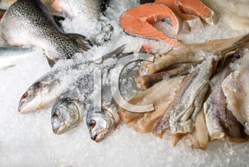 Royalty Free Photo of Fish on Ice