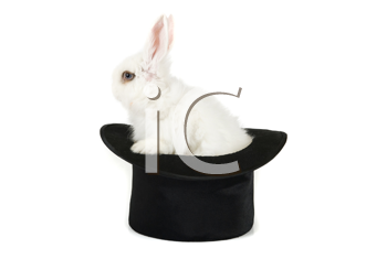 Little rabbit at magic hat isolated on a white background