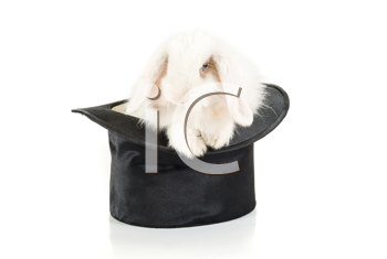 Royalty Free Photo of a Rabbit in a Top Hat