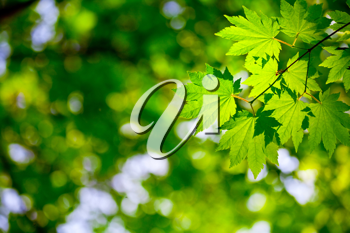 Royalty Free Photo of a Leafy Background