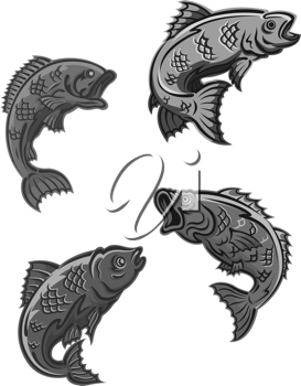 Perch, carp and bass fish isolated on white background for fishing mascot and emblem design