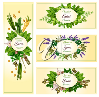 Herbs and spices vector banner set. Garden basil, dill and parsley dressing, spicy ginger, arugula and thyme condiments. Aroma lavender and rosemary grass, cinnamon, vanilla and peppermint or oregano