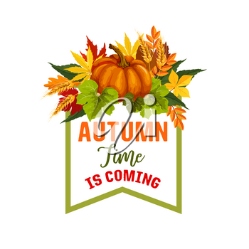 Autumn Time is coming poster for seasonal greeting card design. Vector pumpkin or rowan berry fall harvest, maple leaf foliage or oak acorn and falling leaves of poplar and chestnut for autumn holiday
