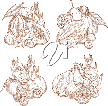 Exotic tropical fruits sketch harvest for farm shop or market store. Vector juicy mangosteen, figs or longan and orange, passion fruit or durian and grapefruit, papaya or mango and yuzu or feijoa