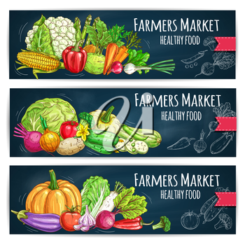 Vegetables sketch on banners with Farmers Market harvest ripe. Vector cabbage, cucumber, tomato and eggplant, kohlrabi, onion and corn, pumpkin and zucchini, radish and leek. Chalk sketched healthy fo