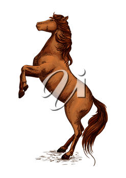 Brown arabian mustang stallion rearing on hooves. Horserace sport symbol of color horse. Vector sketch for equestrian sport, horse riding, equine design. Raging mare with wavy mane
