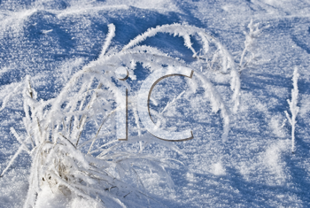 Royalty Free Photo of a Winter Background