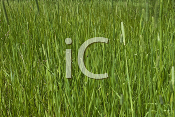 Royalty Free Photo of a Green Grass Background