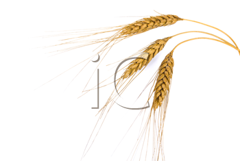 Royalty Free Photo of Wheat Ears