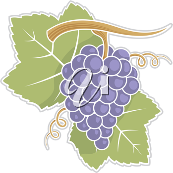 Royalty Free Clipart Image of Grapes