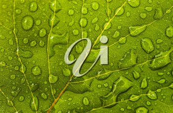 Leaf with water drops: floral or environmental pattern. Extreme macro (artistic shallow DOF)