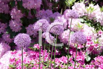 Royalty Free Photo of Flowers from the Halifax Public Gardens
