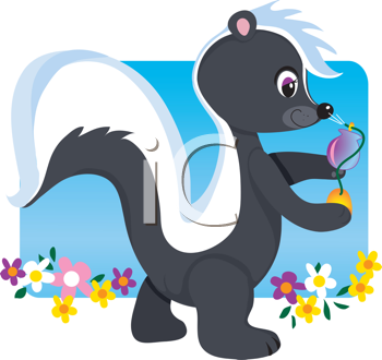 Royalty Free Clipart Image of a Skunk Spraying Itself With Perfume