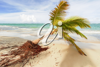 View of Caribbean beach with palm trees.